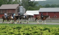 Guided Trail Rides - Willow Grove Farm &amp; Stables