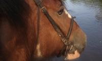 horse-head-stream