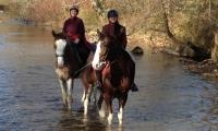 horses-in-stream