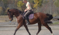 riding-lessons-and-training